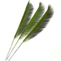 Artificial Cycas Palm Leaves - Plastic Foliage - Choose Pack Size From List in Home, Furniture & DIY, Home Decor, Dried & Artificial Flowers | eBay