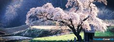 Cherry Blossom Tree Facebook Timeline Cover Hd Facebook Covers - Timeline Cover HD