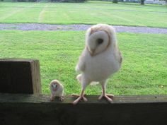 Barn owl by HandmadeByNovember on Etsy on Wanelo