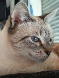 Petite pepette aux yeux bleues