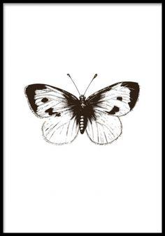 White Cabbage Butterfly, print. Poster med svartvit illustration av fjäril. Svartvit affisch med illustration på en fjäril. Väldigt fint motiv som passar i många inredningsstilar.