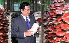 Dato' dr. Lim Siow Jin and Ganoderma