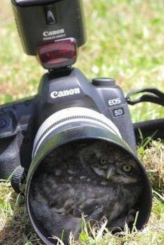 Photo - Shoot!