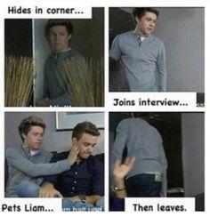 Niall Horan everybody.