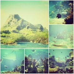 Mako mermaids - mako island