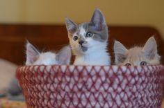 basket of ears #kittens