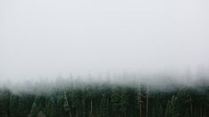 #Mist #nature #trees #forest #dark #cold #silence  #fog