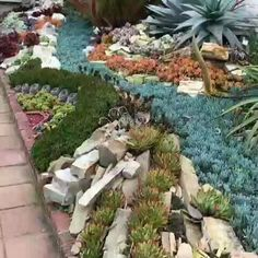 65 Simple and Beautiful Front Yard Landscaping Ideas on A Budget Th. Succulent Rock Garden, Succulent Landscaping, Succulent Gardening, Front Yard Landscaping, Succulents Garden, Landscaping Ideas, Succulent Seeds, Garden Yard Ideas, Lawn And Garden