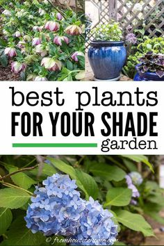 This list of the best shade loving shrubs and perennials is awesome! There are lots of plant options for containers, to grow under trees and that are low maintenance to cover any shade garden landscaping possibilities.#fromhousetohome #gardening #gardenideas #shade #plants #shadeplants Shade Loving Shrubs, Partial Shade Perennials, Shade Flowers Perennial, Flowers Perennials, Shade Shrubs, Full Sun Perennials, Perennial Bushes, Shade Garden, Plants Under Trees