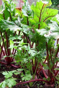 Simple, efffective tips for getting a bigger and better grow-your-own veg harvest. Garden Whimsy, Garden Junk, Garden Sheds, Glass Garden Flowers, Flower Pots, Small Gardens, Outdoor Gardens, Flea Market Gardening, Bird Bath Garden
