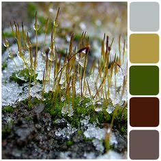 Family Home and Life: Spring Thaw Color Palette