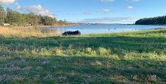 #nature #norway #camping #grass #flowers #pretty #beautiful #aesthetic #summer #summervibes #sunset #goldenhour #ocean