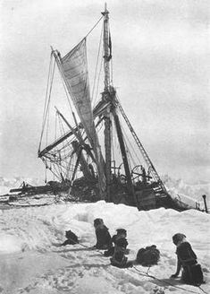 Photograph of the dogs watching the half sunk ship, the Endurance. Sir Ernest Shackleton