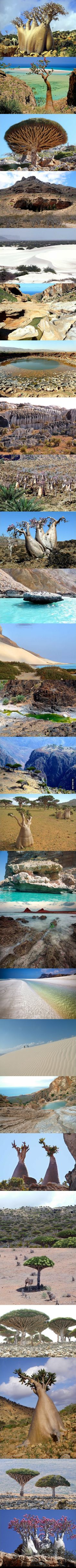 Socotra Island, Yemen. One of the most alien looking places on earth.