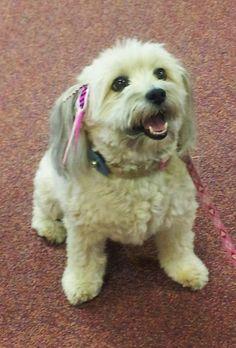 Beatrix looks so fancy in her Pet Plumes!
