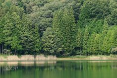- Forest and lake
