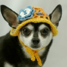 1000 images about crochet animals clothing on pinterest - Dog hat knitting pattern free ...