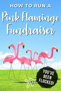 In this post, you'll learn how to run a flamingo fundraiser for your school or other cause. These tips are perfect for an easy PTA or PTO fundraising event and will help you with make money while having lots of fun. Get free printable flyers, You've Been Flocked yard signs, and editable order forms for your fundraising event. Who knew you could raise funds using pink plastic flamingos?! Head to roommomrescue.com to learn more about flamingo fundraising. Plastic Pink Flamingos, Pink Plastic, 2nd Grade Activities, Flyer Free, Learn To Run, School Fundraisers, Raise Funds, Fundraising Events, Sign Printing