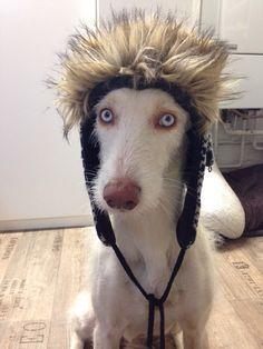 Hunde Foto: Stefanie und Chino - Draußen ist es bitter kalt. Hier Dein Bild hochladen: http://ichliebehunde.com/hund-des-tages  #hund #hunde #hundebild #hundebilder #dog #dogs #dogfun  #dogpic #dogpictures