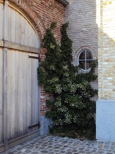 soft weathered wood, ivy, brick and stone - - - quite lovely combination, no?