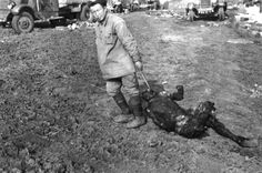 A Soviet POW removes the charred remains of a comrade with a meat hook from the location of an engagement between German armor and a Red Army motorized column. The result was the annihilation of the latter. June 1941.