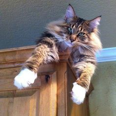 .Just hanging out up here, and no, I'm not coming down.