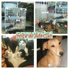 BONDE DA BARDOT: SP: Adote um animal na campanha da ONG Auqmia, em Santo Amaro, neste sábado (17/09)