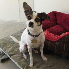 9/8/16 Dog Adoption San Diego - Adopt A Dog | Cat Adoption San Diego - Adopt A Cat…