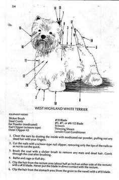 ROSEBIRD KENNELS | - WEST HIGHLAND TERRIER grooming