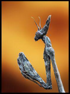 Praying mantis...looks like something from Star Wars