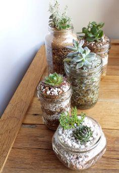 Mason Jar Succulents - pick and choose! on Etsy, $12.00