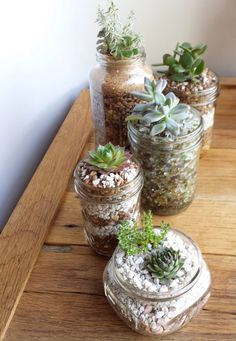 Mason jar succulents