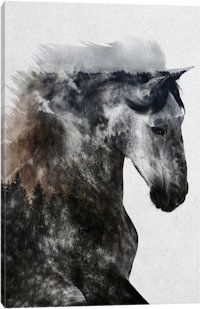 Proud Stallion Canvas Art Print