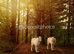 Wolves Stock Photos, Illustrations and Vector Art | Depositphotos®