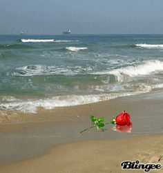 Rose on the sand.../ss