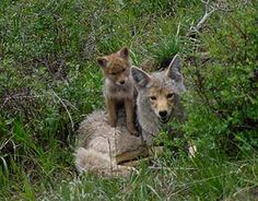 """louisiana wildlife 
