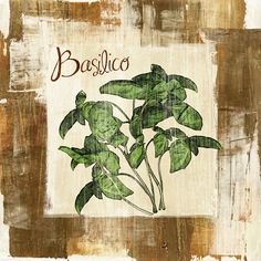Basilico Graphic Art on Wrapped Canvas