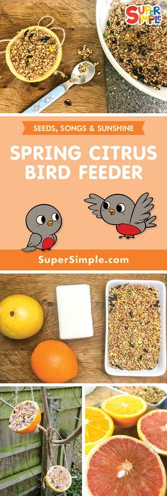 Spring Citrus Bird FeederWhat exactly Are the Greatest Items with regard to Young children This Tend to be Tim Spring Crafts For Kids, Easy Crafts For Kids, Simple Crafts, Bird Feeder Craft, Bird Feeders, Recycled Crafts, Winter Food, Food Lists, Safe Food