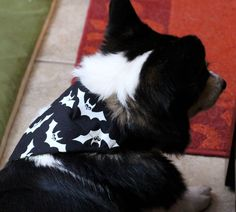 Spooktacular dog over the collar style Halloween bandanas with goofy bats by PuppyPawzBoutique on Etsy