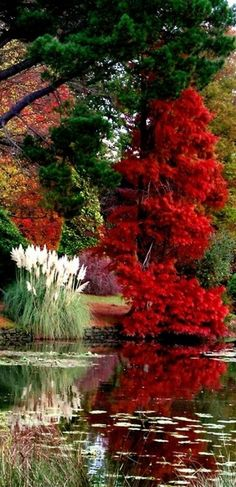 Amazing garden and water creation