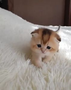 Adorable Names For Kittens; Cute Baby Fluffy Kittens beyond Cute Animals Images Hd few Cute Farm Animals Coloring Pages Baby Animals Super Cute, Cute Baby Cats, Funny Cute Cats, Cute Little Animals, Cute Cats And Kittens, Cute Funny Animals, Kittens Cutest, Fluffy Kittens, Siberian Kittens