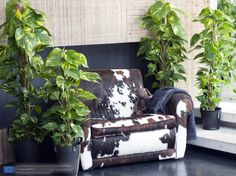 Devil's Ivy, also known as Epipremnum, is Houseplant of the Month of February. Houseplants, Outdoor Decor, Flowers, Home Decor, Products, Gardens, Leaves, Indoor Air Quality, Bloemen