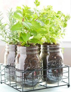 Need DIY garden projects and ideas to decorate your home outdoor? Find 101 DIY garden projects made with recycled materiel to upgrade your garden at no cost. Mason Jar Herbs, Mason Jar Herb Garden, Diy Herb Garden, Mason Jar Diy, Garden Fun, Pots Mason, Gravel Garden, Herbs Garden, Garden Oasis