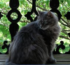 Bookend, library cat at Jervis Public Library, Rome NY (RIP)