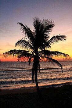 Beautiful Sunrise and palm tree