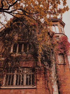 Green Knight, Sunflower Wallpaper, Season Of The Witch, Autumn Cozy, Autumn Aesthetic, England And Scotland, Fall Wallpaper, Enjoy Summer, Autumn Photography