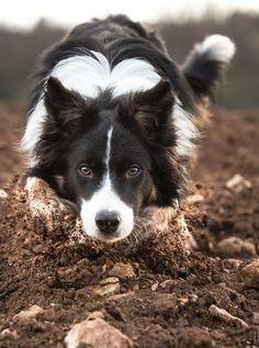 handsomedogs — Jean-noel Kern|un mouton 2