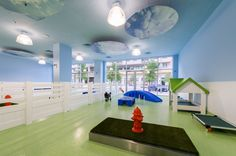 lime green doggy daycare lobby colors - Google Search