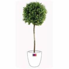 1000 id es sur le th me plante artificielle exterieur sur for Plantes artificielles d exterieur