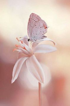 Pretty pink flower with butterfly. The butterfly camouflages a lot into this